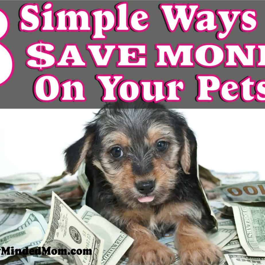 8 Simple Ways To Save Money On Your Pet ~ Our pets are family, we want to take the best care of them. But we don't want to spend a fortune doing so. Here are 8 great tips that will save you a bunch of money on your pets. Pet Care | Saving Money on Pets | DIY Pet Care | Pet Care Tips | Money Saving Tips