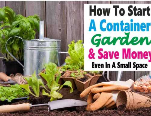 Container Gardening ~ A Clever Way to Save Money and Space