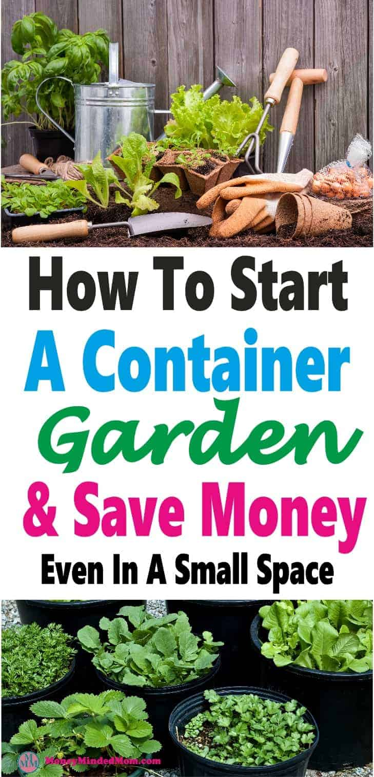 Container Gardening - A Clever Way to Save Money and Space ~ Gardening and growing your own food is a great way to save money and eat healthier for less & you don't need a huge space either. Read on to learn all the ins and outs of container gardening. garden   gardening   vegetables   save money   eat healthy   health #health #healthyeating #savemoney #garden #gardening #containergardening
