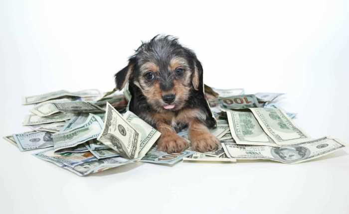 Pet Care Budget Categories
